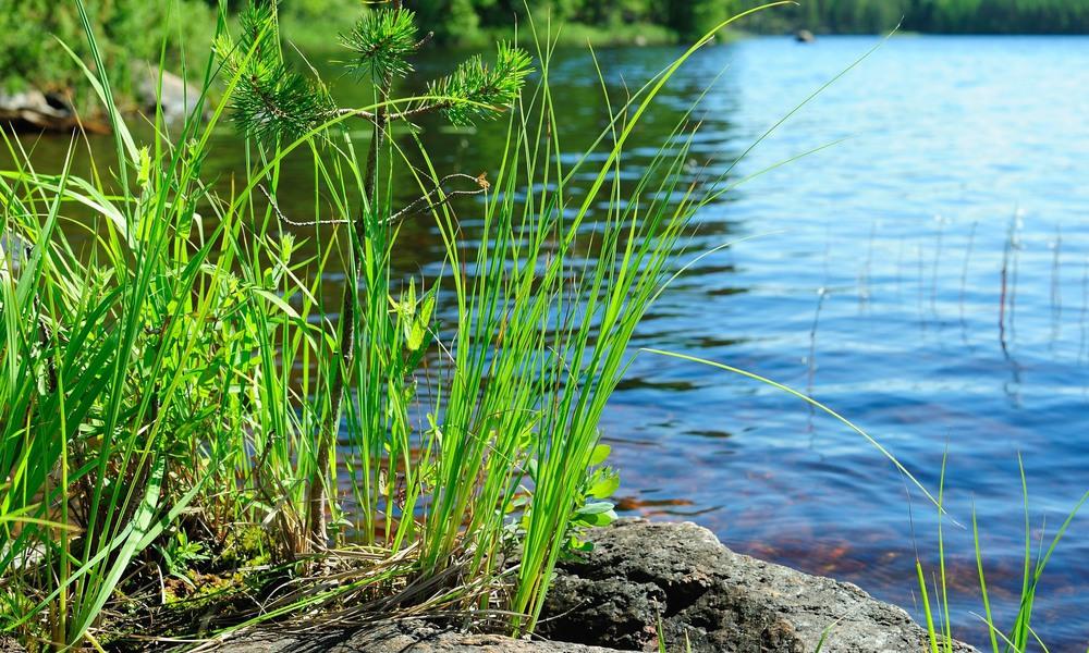 Pilotprojekt visar badtemperaturen på fyra badplatser i Tingsryds kommun